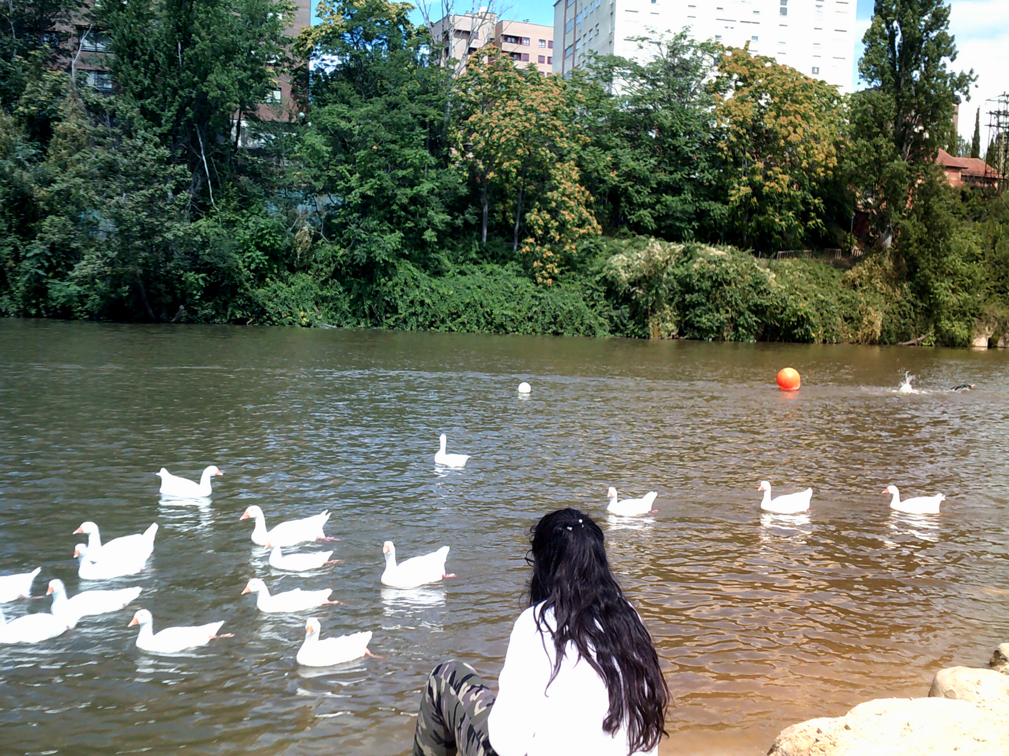 Joven de espaldas en el río frente a varias aves